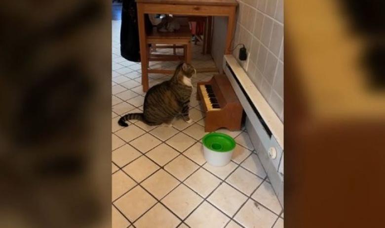 macska pénzt keres video helyes kereskedés bináris opciókkal