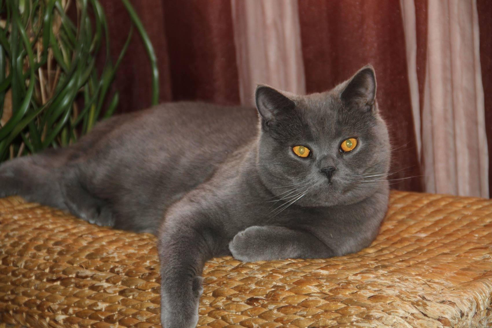 macska pénzt keres video indikátor bináris opciók vásárolni